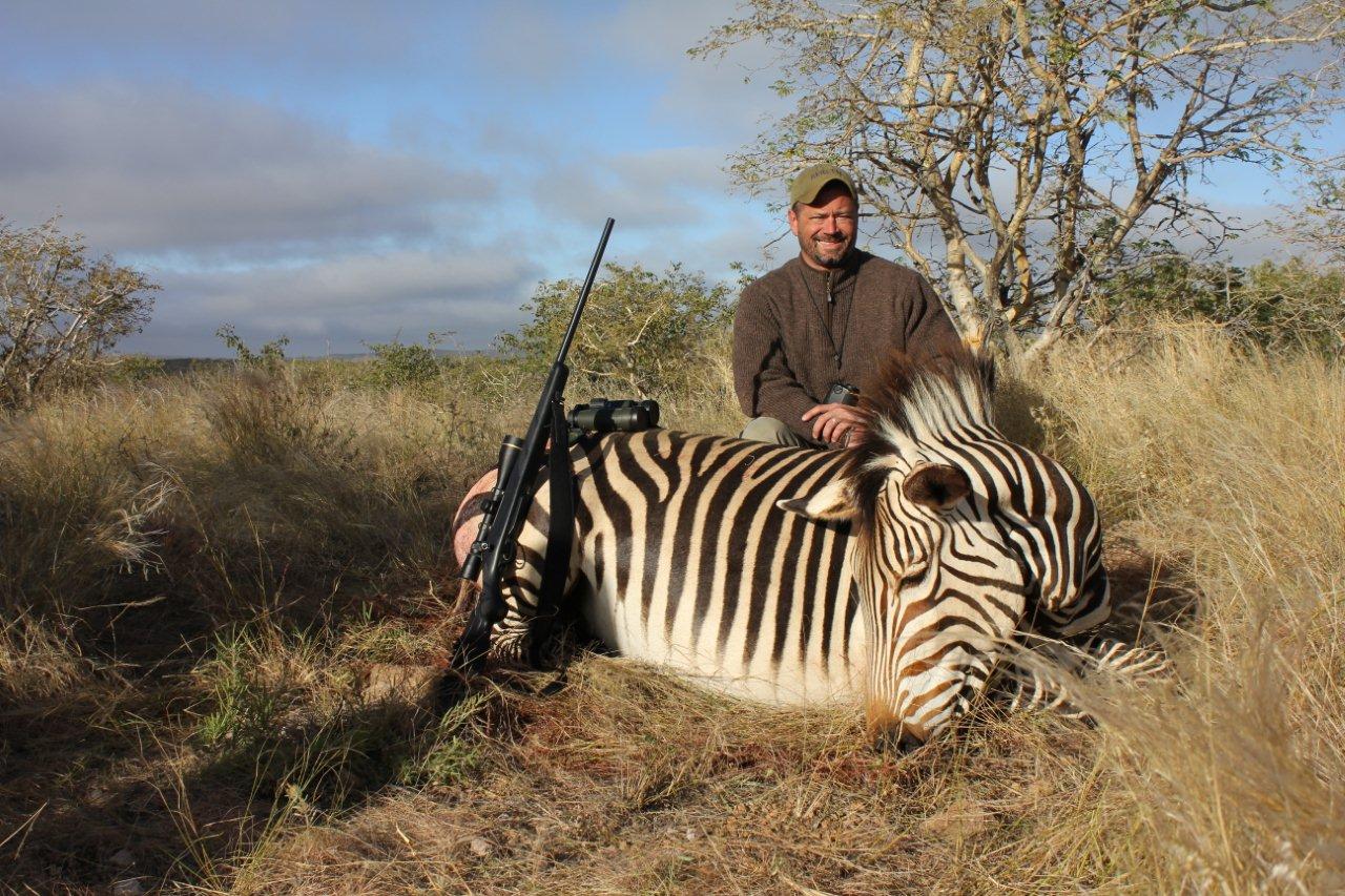Male Lion Hunting Zebra Hcu africa hunt nmcs namibia