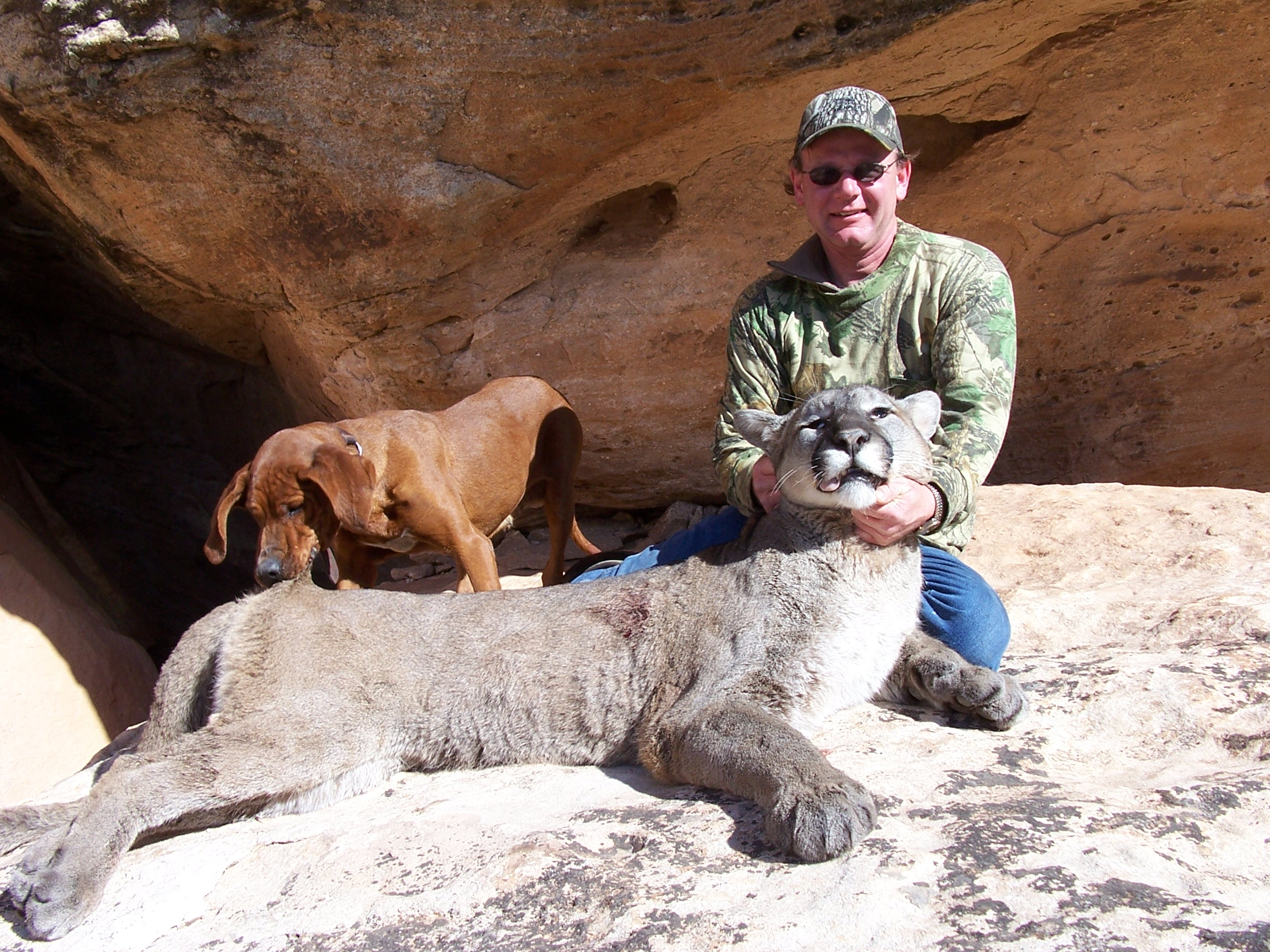 an analysis of mountain lion dh lawrence It has never yet melted — dh lawrence mississippi rebel reports that a new mexico mountain lion and even killed and eaten by mountain lions in.